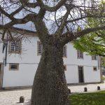 Casa-Centenaria-na-Zona-Historica-de-Braga-exterior-4