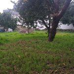 Casa-Centenaria-na-Zona-Historica-de-Braga-terreno-3
