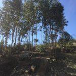 Lote-para-construcao-em-vila-verde-2